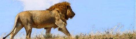 free lion 2