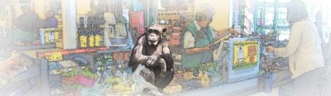 chimp checkout